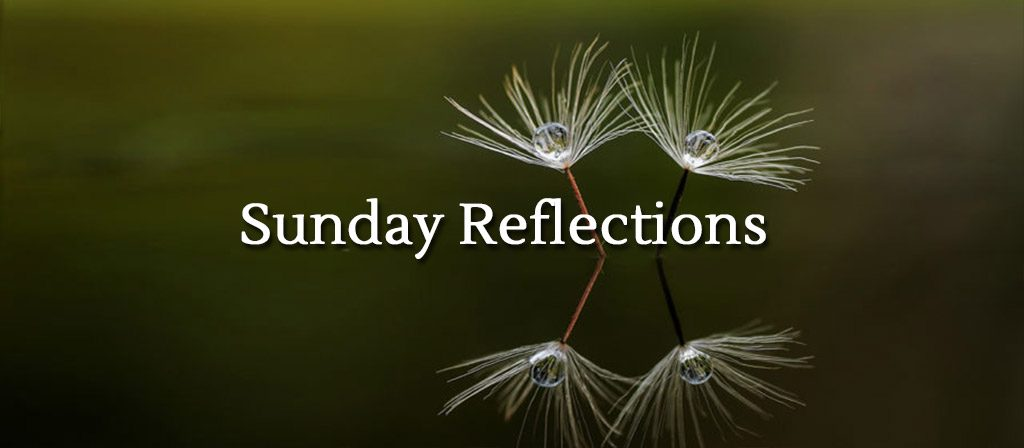 Sunday Reflections Video Gallery